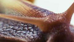 Snail horns and eyes - stock footage