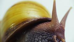 Snail video sequence Stock Footage