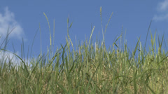 The grass on a background of clouds Stock Footage