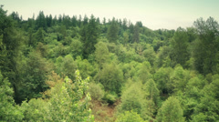 Trees tops in a forest Stock Footage
