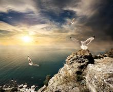 Seagulls and sunset - stock photo