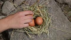 Hand lie fresh eggs to chicken hen nest place in rural farm Stock Footage
