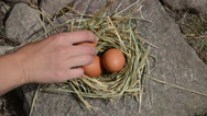 Stock Video Footage of Hand lie fresh eggs to chicken hen nest place in rural farm