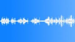 Forest Lake. Polyphony birds. Sound Effect