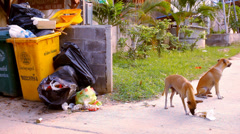 Stray dogs eat the scum around garbage bins. Video Stock Footage