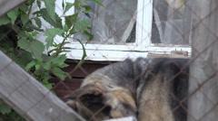 Mongrel dog sitting in yard 4k Stock Footage