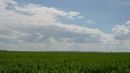 Rural view, and corn field Stock Footage