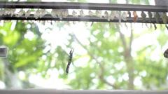 Butterfly farm cocoon Stock Footage