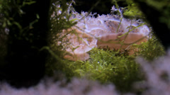 Anemones in zoo aquarium Stock Footage