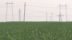 WHEAT GRASS AND TRANSMISSION LINE Stock Footage