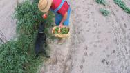 Stock Video Footage of Farmer Gardening