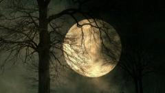 large moon background. trees silhouette. full moon night. mystic night sky. - stock footage