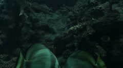 Deep sea view fish and coral reef Stock Footage