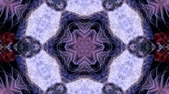 anemone purple pink kaleido - stock footage