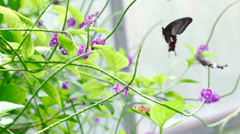 Two butterflies Slow motion Stock Footage