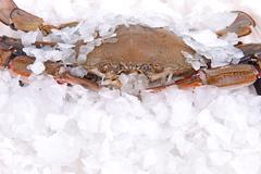 Crab freeze in ice Stock Photos