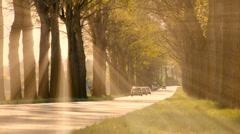 Sun rays. sunbeam. trees silhouette background. beaming light. nature. fantasy Stock Footage