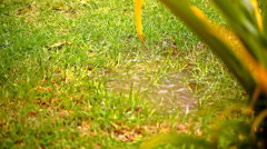 Puddle in a meadow after rain storm. Video shift motion Stock Footage