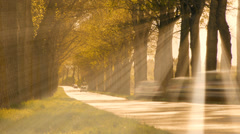 Sun rays. sunbeam. trees grove branches. beaming light. street road cars Stock Footage