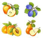 Stock Illustration of fruits collection