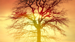 Sunset sly trees silhouette background. beaming light. nature. fantasy Stock Footage