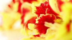 Gladiolus. red-yellow flowers Stock Footage