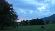 Stock Video Footage of Horses grazing in paddock,South Africa.Wide shot,sunset.