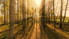 Sun beams trough trees in forest. beaming light. nature. fantasy Stock Footage
