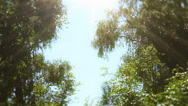 Stock Video Footage of Beautiful Summer Trees 2