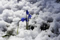 First spring flowers growing in the forest Stock Photos