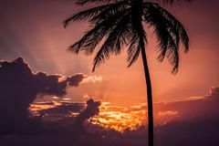 sunset over a palm tree and clouds - stock photo