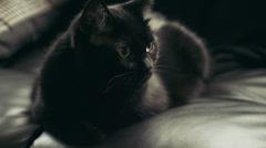 Black cat resting, 4K Stock Footage