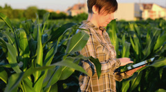 Stock Video Footage of Woman agronomist using tablet computer in corn field