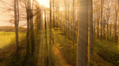 Flying through forest trees at sunset light. Stock Footage