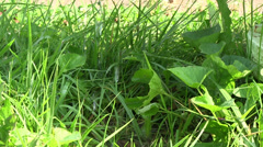 Dripping water into the grass - stock footage