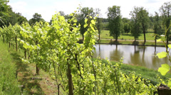Gaasbeek Castle. The vineyards on the rampart. Stock Footage