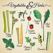 Vegetables & herbs Stock Illustration