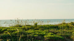 Sea Oats at Satellite Beach Stock Footage