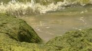 Stock Video Footage of slow Black Sea waves splashing on the shore covered with green algae and slim