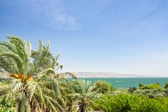 Date palms on the shore of lake kinneret Stock Photos