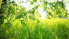 Summer park. Green grass, leaves and sunrays. Shot with motorized slider Stock Footage