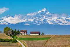 Vineyards and monviso peak in piedmont, italy. Stock Photos