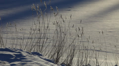 Frost covered grasses on a sunny winter day Stock Footage
