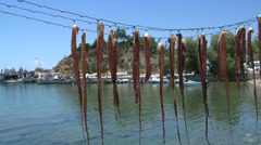 Squid drying in imenaria harbor Thassos Greece Stock Footage