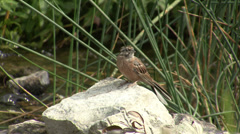 Small bird drinking water in the hot summer Stock Footage