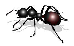 bug - forest ant - stock illustration