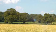 English oak trees and corn field landscape Stock Footage