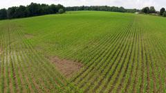 Cornfield Aerial Stock Footage