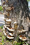 Fungi clinging to a tree Stock Photos