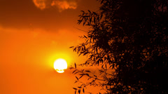 Beautiful Sunset Tree. HD 1080. Stock Footage